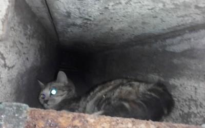 Katze in Not 09.02.2016